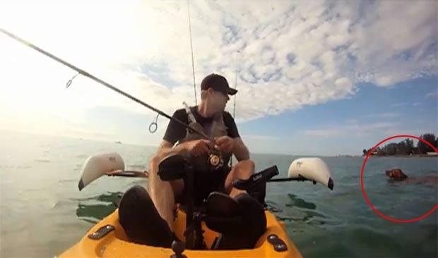 Homem encontrou cão dentro do mar enquanto pescava na Flórida. (Foto: Reprodução/ABC Action News)