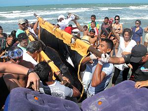 Homens do projeto Manatí resgataram a baleia na Praia do Preá já morta. (Foto: Aquasis / Divulgação)