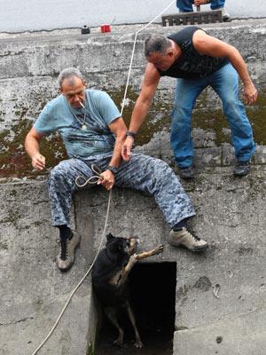 Cão foi resgatado nesta terça-feira (Foto: Walter Mello/Agência A Tribuna)