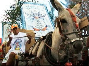 Decisão permite jegues na Lavagem do Bonfim, diz procurador (Foto: Reprodução/TV Bahia)