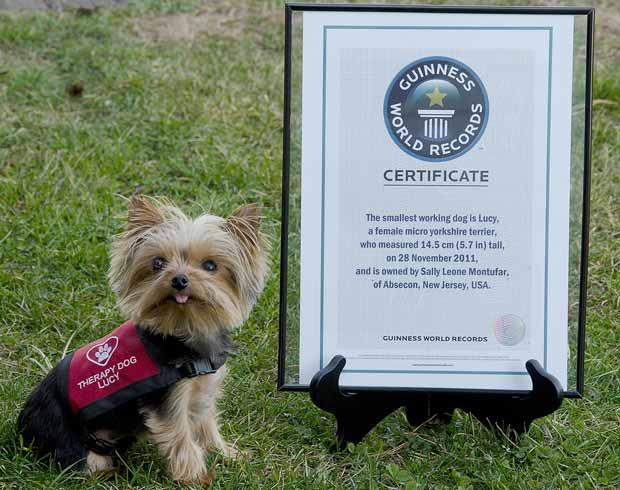 A pequena Lucy posa ao lado do prêmio neste sábado (7) em Smithville, no estado americano de Nova Jersey (Foto: AP)