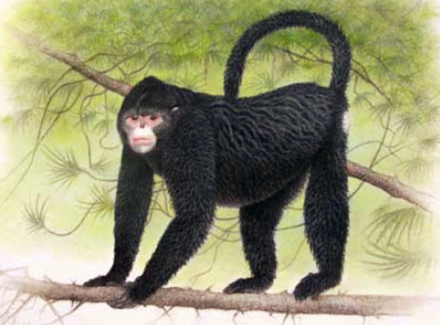 Anteriormente, apenas uma ilustração do primata havia sido divulgada. (Foto: Divulgação/WWF/Reuters)