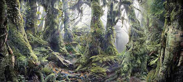 Floresta 1 (Foto: Caters)