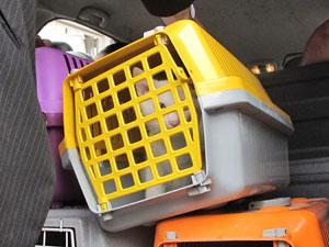 Animais foram levados para delegacia e ficarão com ONG (Foto: Juliana Cardilli/G1)