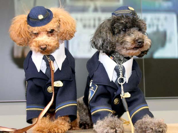 As cachorrinhas Karin, de 1 ano, e Fuga, de 2, posam em roupinhas de policial em Tottori, no Japão. Eles 'trabalharam' como plantonistas honorários, em uma ação de relações públicas da polícia e que tinha o objetivo de divulgar o número de emergência no país. Foi a primeira missão deles desde que foram qualificados como cães policiais, em novembro de 2011, segundo a agência Kyodo (Foto: AP)