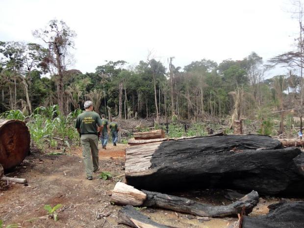 Desmatamento Mato Grosso (Foto: Assessoria/Ibama)