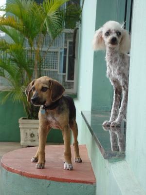 Cachorro fica na porta da clínica ao lado da cadela Zara (Foto: Alan Schneider/G1)