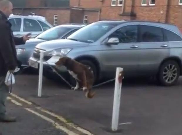 Cão se equilibrou em cima de uma corrente. (Foto: Reprodução/YouTube)