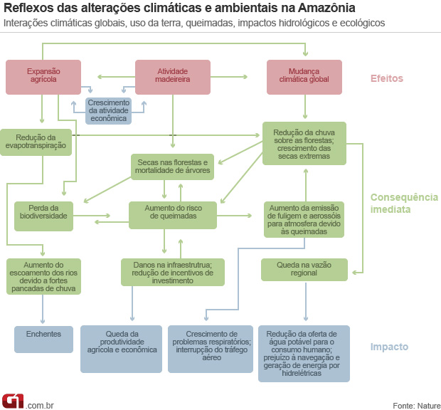 Amazônia fluxograma (Foto:  )