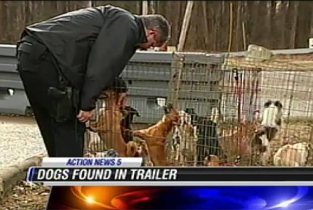 Autoridades encontraram 128 cães dentro de caminhonete de mudança e minivan. (Foto: Reprodução)