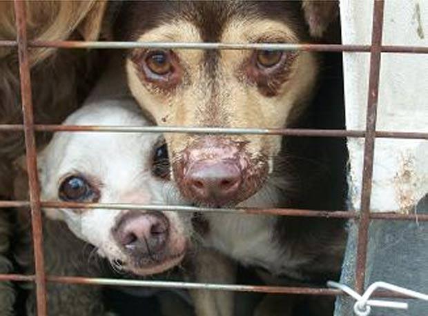 Polícia achou 128 cães em dois veículos. (Foto: Divulgação/Fayette Co. Animal Control)