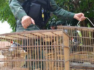 Pássaros foram apreendidos na Grande João Pessoa (Foto: Walter Paparazzo/G1)