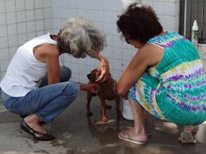 Protetoras voluntárias dão banho e cuidam dos cães no CVA. (Foto: Katherine Coutinho / G1)