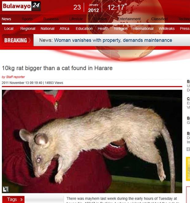 Rato pesaria cerca de 10 quilos. (Foto: Reprodução)