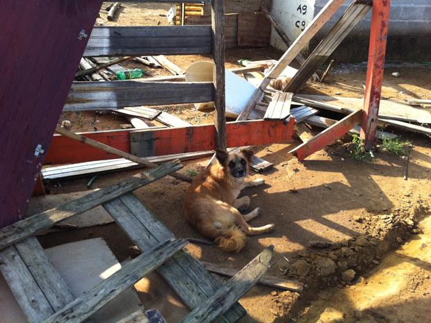 cão pinheirinho (Foto: Juliana Cardilli/G1)
