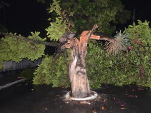Jambeiro caiu e atingiu rede elétrica (Foto: Walter Paparazzo/G1)