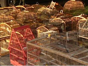 Polícia Militar Ambiental aprendeu 42 aves silvestres em Cariacica (Foto: Reprodução/TV Gazeta)