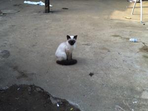 gato pinheirinho (Foto: Juliana Cardilli/G1)