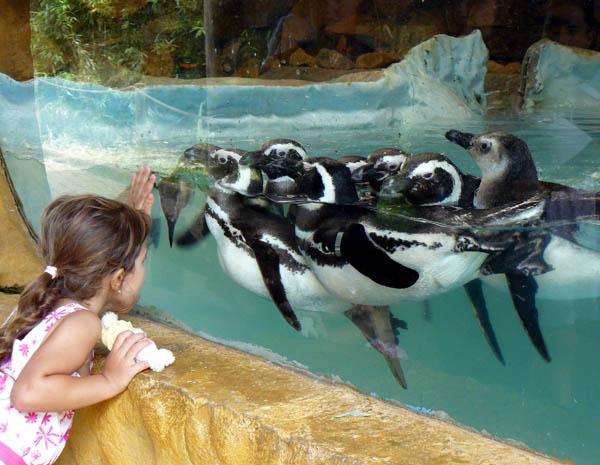 No calor, animais se refrescam no zoológico de Gramado (Foto: Caroline Zanchi / Divulgação)