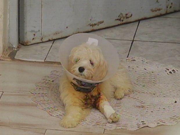 A dona da cachorra a colocou embaixo da água e a cola saiu, mas, os ferimentos ficaram na pele. (Foto: reprodução/TV Tem)
