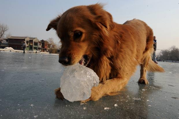 Cena ocorreu no lago Houhai durante o feriado do Ano Novo Lunar. (Foto: Mark Ralston/AFP)