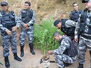 Polícia apreende aves e prende homem com drogas em João Pessoa (Foto: Walter Paparazzo/G1 PB)