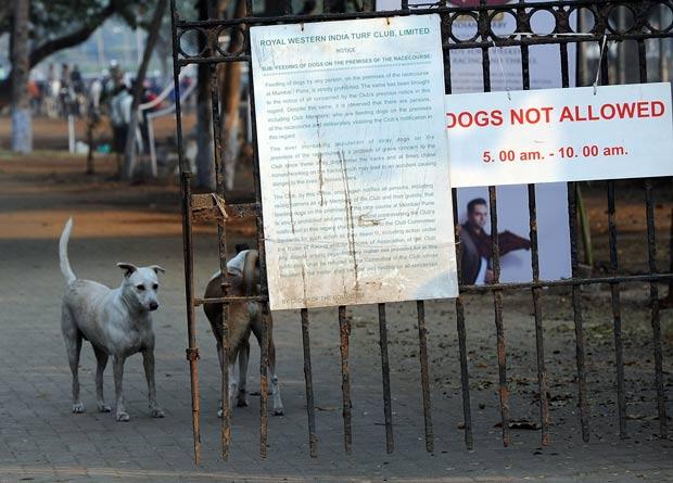 Um aviso indicando que não é permitida a entrada de cachorros parece não ter surtido muito efeito em um clube de turfe em Mumbai, na Índia. Nesta quarta-feira (1º), o fotógrafo Indranil Mukherjee flagrou dois cães caminhando tranquilamente dentro do clube. (Foto: AFP)