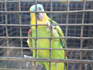 Polícia Ambiental apreende aves na Paraíba (Foto: Walter Paparazzo/G1 PB)