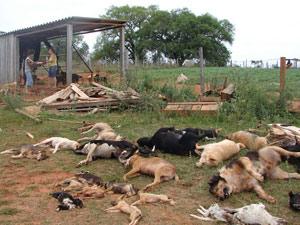 Morte cães (Foto: Foto: Jeremias Oliveira/Divulgação)