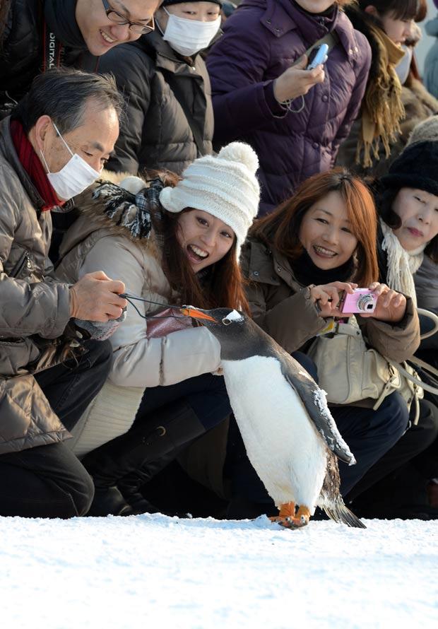 Pinguim tentou puxar a alça de uma câmera de visitante em zoo. (Foto: Takashi Noguchi/AFP)