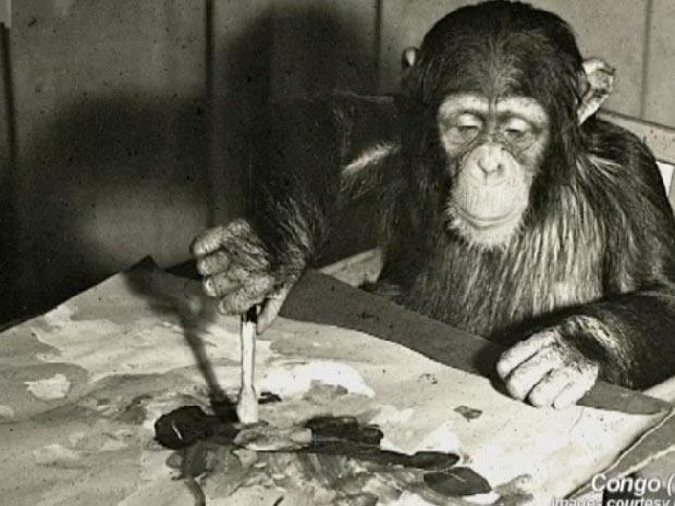 chimpanzé3 (Foto: BBC)