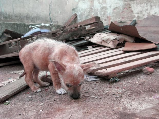 Cachorra Kim foi a última a ser encontrada; embaixo de pilha de lixo (Foto: Fabiano Correia/ G1)