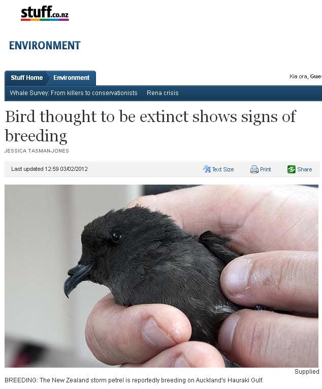 Pássaro (Foto: Reprodução)