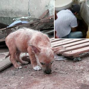 Vídeo mostra cães presos sob o chão de casa abandonada em SP (G1)