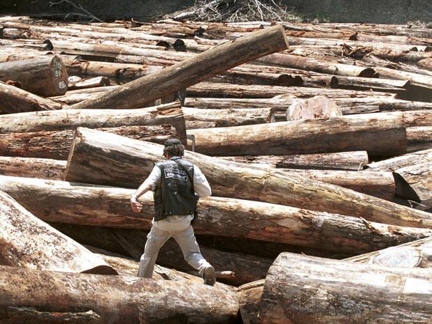 O trabalho de Paulo Adario envolveu denúncias contra madeireiras ilegais (Foto: Greenpeace/Daniel Beltra)