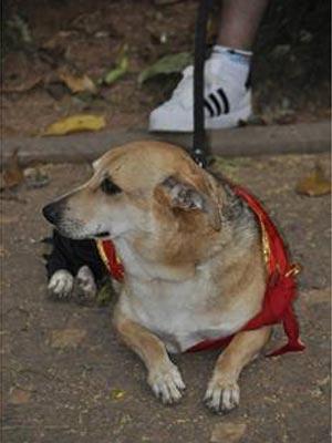Cão Bob, anfitrião de bloco carnavalesco de Campinas (Foto: Tiago Gonçalves/ G1 Campinas)