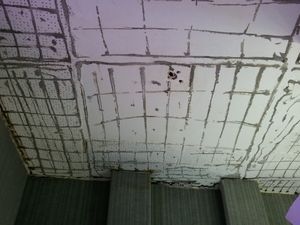 Parte do teto sofre com alguns danos (Foto: Flávio Antunes/ G1 SE)