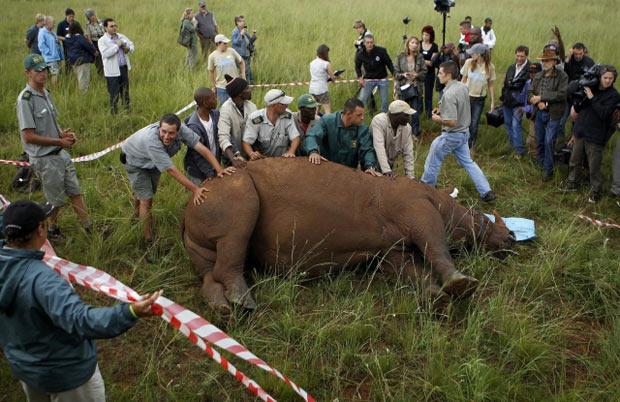 Rinoceronte (Foto: Siphiwe Sibeko/Reuters)