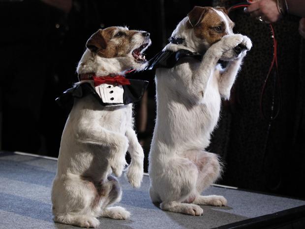 Uggie, de 'O artista', e Dash chegam à cerimônia de Golden Collar Awards, em Los Angeles, na segunda-feira (13) (Foto: AP/Matt Sayles)