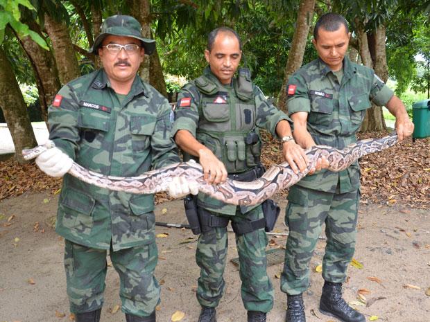 Cobra é capturada em residência em João Pessoa (Foto: Walter Paparazzo/ G1)