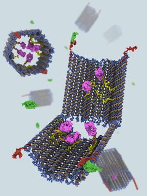 Pedaços de DNA transportam 'mensagens' de autodestruição a células cancerígenas. (Foto: Science)