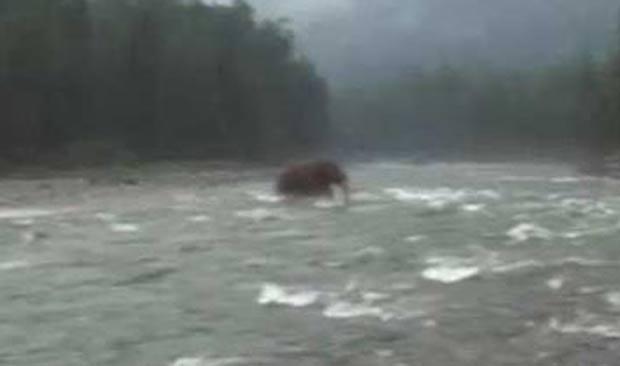 Vídeo adulterado mostrava animal que se parece a um mamute. (Foto: Reprodução)