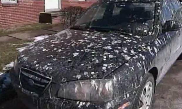 Moradores têm encontrado seus carros e casas cheios de excremento. (Foto: Reprodução)