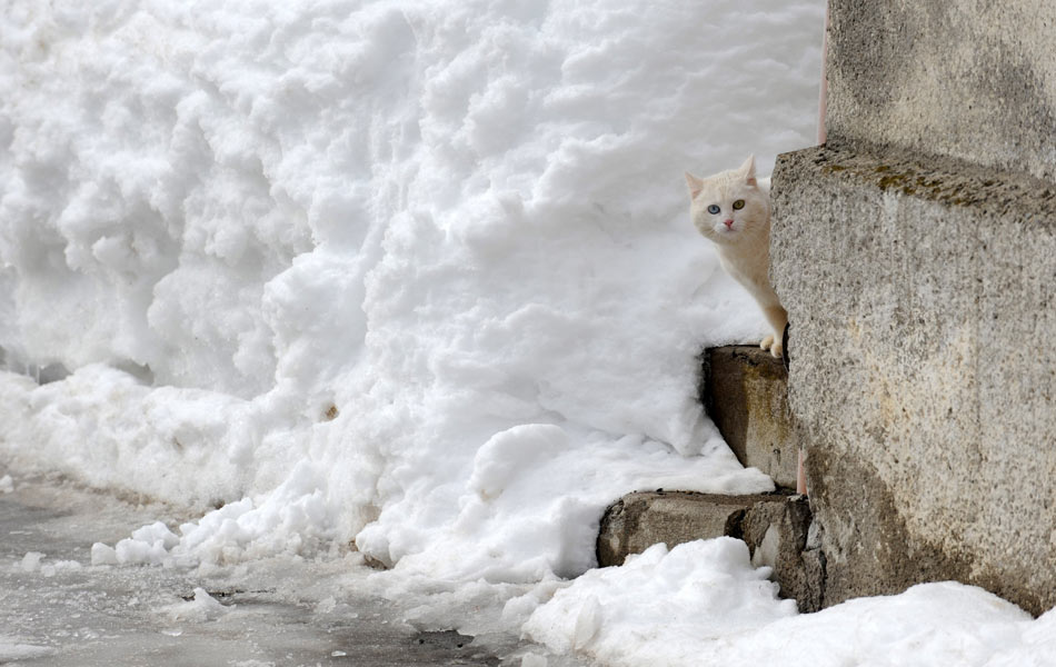 17 de fevereiro - Gato branco 'camuflado' na neve na cidade alemã de Tiefenbach