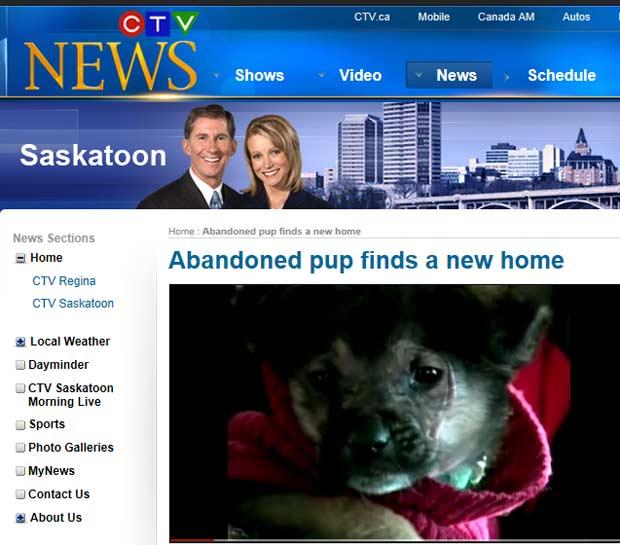 Cão salvo do frio por jogadores de hóquei ganha novo lar no Canadá (Foto: Reprodução de vídeo)