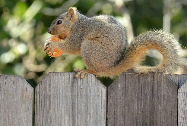 Imagem foi capturada em Woodland Hills, na Califórnia. (Foto: Joe Klamar/AFP)
