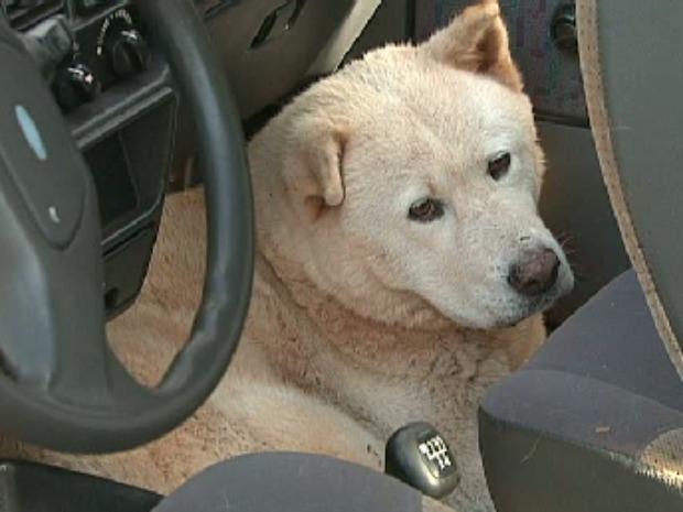 Animal está dentro do veículo desde a tarde de quinta-feira (23) (Foto: Reprodução / RPC TV)