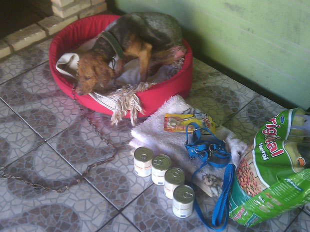 Nina se recupera em casa das queimaduras sofridas há uma semana. (Foto: Luís Paulo Neto/Arquivo Pessoal)