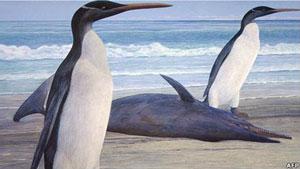 Ilustração do pinguim gigante Kairuku (Foto: AFP/BBC)