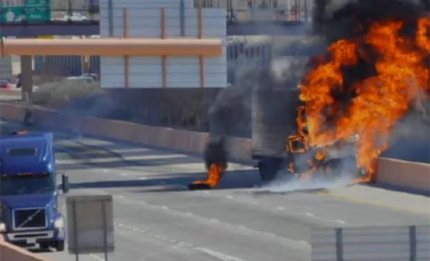 Cão invadiu rodovia em Albuquerque e provocou acidente. (Foto: Reprodução)